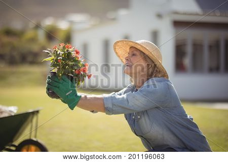 Smiling senior woman holding sapling plant in garden on a sunny day