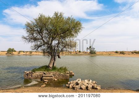 Horizontal picture of green tree in a oasis in Thar Desert located close to Jaisalmer the Golden City in India.