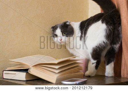 The cat with a gaze standing near books