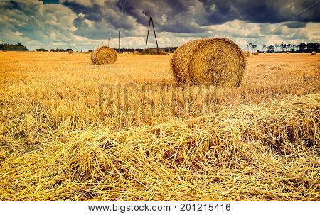 Agricultural landscape with rolls of haystacks. Rich harvesting concept