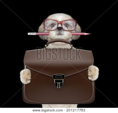 businessman shitzu dog with suitcase or bag isolated on black background