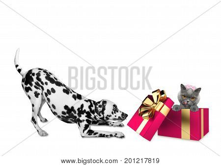 Cute dalmatian dog standing near his birthday gift box with little cat