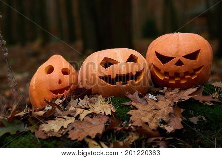 Three different orange pumpkins with big eyes, prepared for Halloween, among leaves in forest. Celebrating autumn holiday. Hand made decor for party.