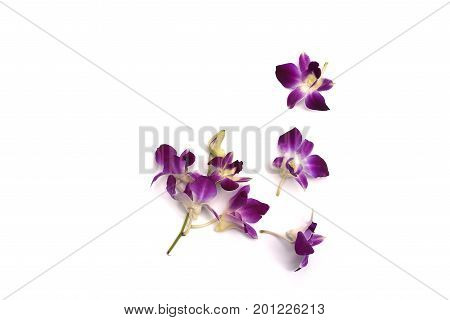 Orchid flower isolated on white background, thailand