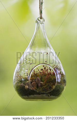 A gardening craft called terrarium, plants in crystal pots