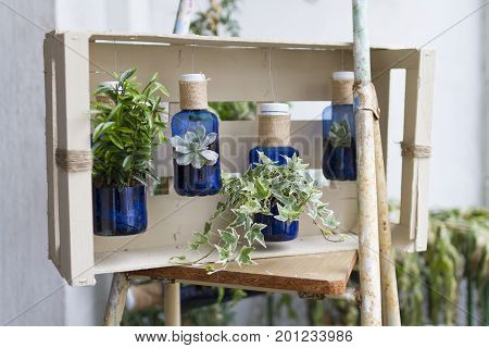 A vertical garden made with recycled plastic bottles