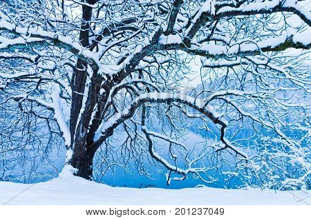 Tree covered with snow during winter at Lake Bled in slovenian alps, Slovenia
