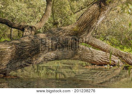 Tree reflected in the water. In the park Agia Varvara in Drama, Greece