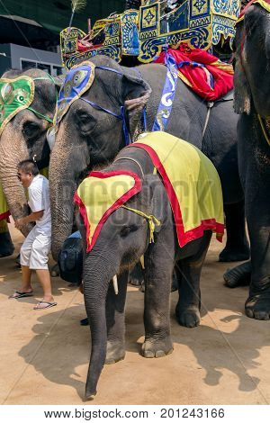 THAILAND, PATTAYA, MARCH, 10, 2015 - Elephants on Elephants show in Nong Nooch private botanical garden in Pattaya, Chonburi Province, Thailand