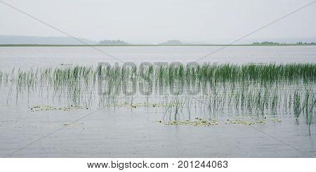Water Sedge And Floating Lilies At Kenozero Lake.