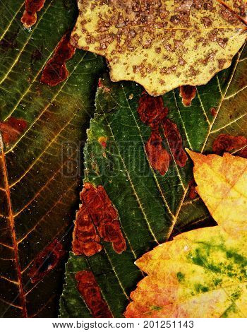 autumn leaves texture can be used as floral background