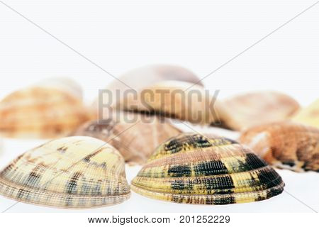Ocean Concept. Shells Isolated On White