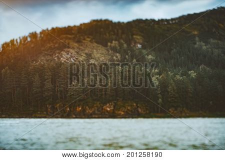 True tilt-shift shooting of Katun river bank with coniferous forest on flank of the hill: multiple pine trees peak of mountain in defocused background and water in foreground Altai district Russia