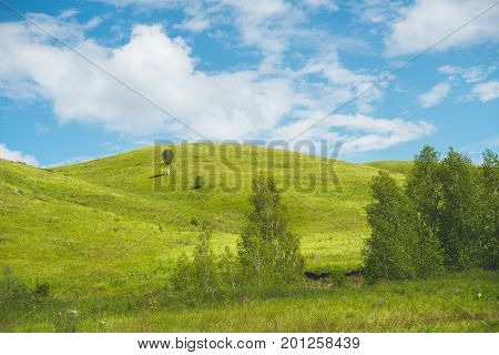 Calm bright landscape: beautiful low hills lit by morning sun through cloudscape birches and meadow in foreground single tree on hill blue sky Altai mountains Russia