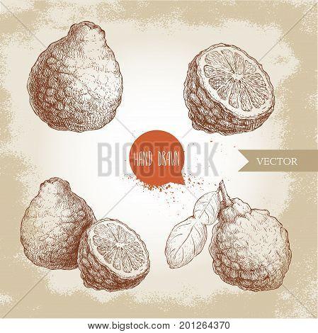 Hand drawn sketch style bergamot fruits set. Kaffir lime whole with leaf and half vector illustration. Organic food. Citrus collection on vintage background.