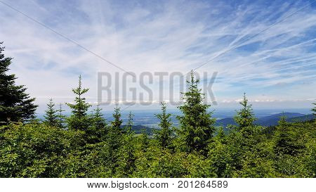view of one forest in Bulgaria from the hill