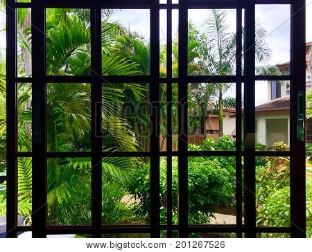 Dark window panes against tropical foliage outside