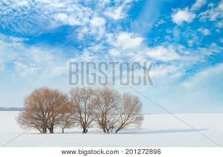 snow-covered field and trees in the snow