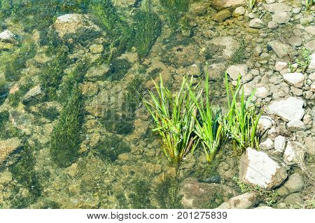 Vegetation plants in the rover water with rocky shoreline on natural light view from above.