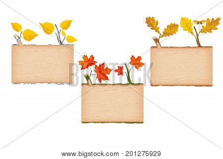 Set of three natural textured wooden rectangular log signboard with yellow birch red maple and brown oak autumn leaves vector illustration