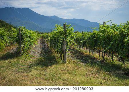 Georgian Wine Area Kakheti
