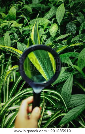 Man woman hand holding magnifying glass. Green plant leaves view through loupe. Nature study learning concept.
