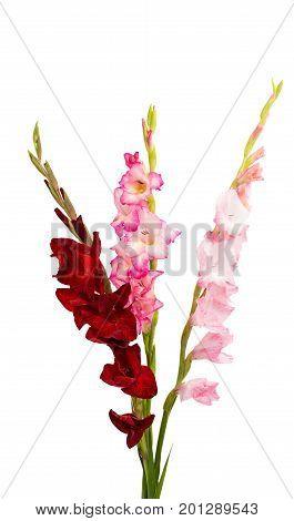 Beautiful bouquet gladiolus flower on white background