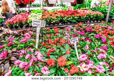Montreal, Canada - May 28, 2017: Florist Store With Many Colorful Begonia Flowers And People Walking