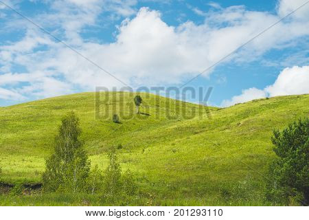 Bright scenery: beautiful bright low hills lit by morning sunlight birches and meadow in foreground single tree on the hill fine blue sky Altai mountains Russia