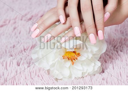 Well-groomed nails nail nail art design. pink and white colors of nail art. Nail polish. Beauty hands. Fashion Stylish Fashion Colorful Nails