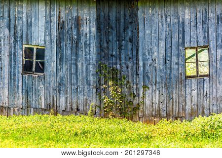 Blue Painted Old Vintage Shed With Yellow Dandelion Flowers In Summer Landscape Field In Countryside