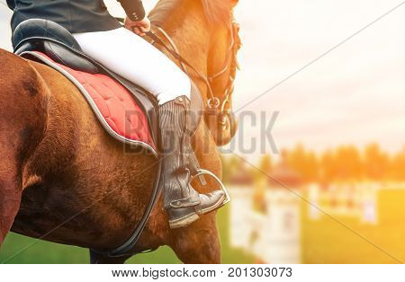 Horse riding closeup on show jumping field toned image