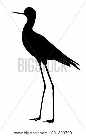Vector illustration of black winged stilt silhouette