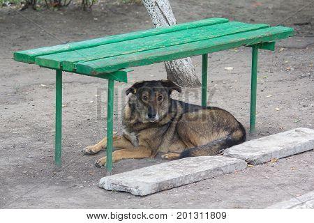 Homeless dog lies under the bench. Pets
