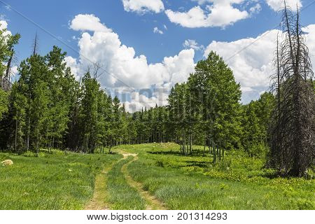 Back country four wheel drive trail in the Manti-La Sal National Forest located in Emery County Utah USA.