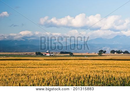 Morning sun on a cornfield with the Rocky mountains in the background