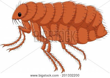 Vector illustration of Cartoon flea isolated on white background