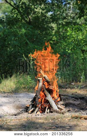 hot camp fire on sunny meadow in forest