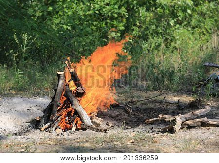 camp fire in green forest