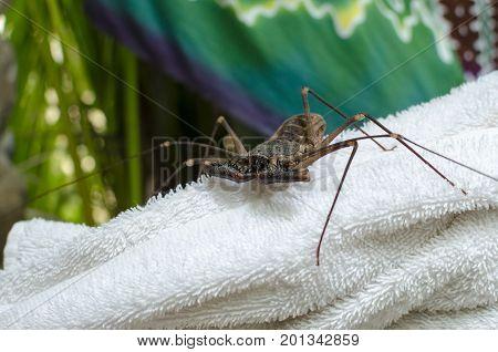 Whip scorpion sitting on white bath towel
