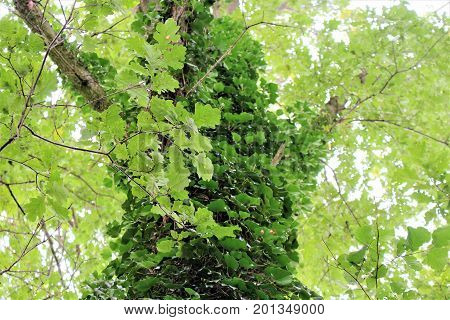 An image of a treetop - nature