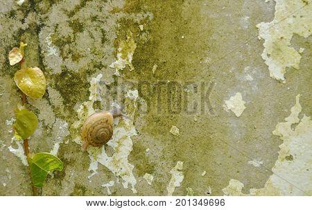 snail climbing slowly beside Mexican daisy on wall