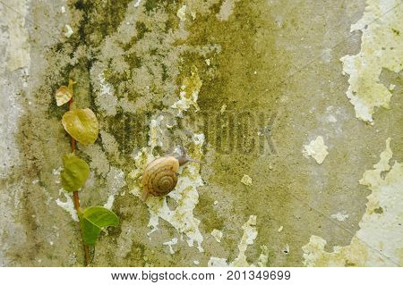 snail crawling slowly beside Mexican daisy on wall