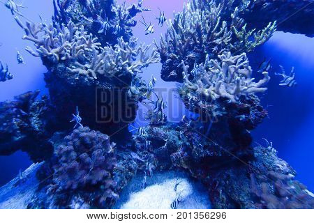 Colorful Exotic Tropical Fishes Underwater In Aquarium.