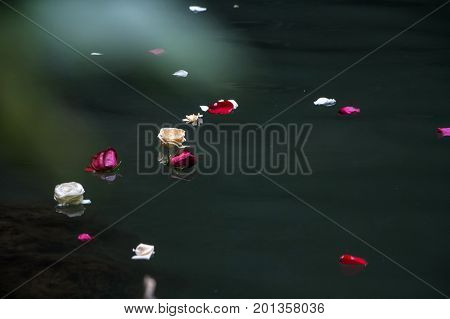 Red, White And Pink Petals Over The Water Surface