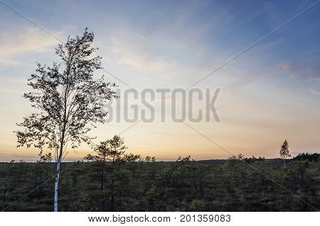 Latvia. beautiful colors in the evening before sunset in the swamp Dunikas