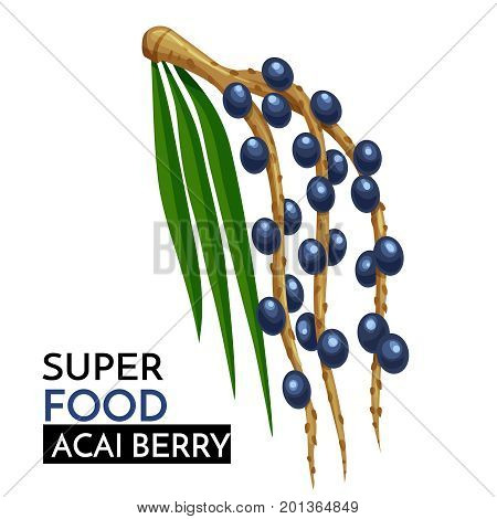 Acai berry vector icon. Healthy detox natural product superfood illustration for design market menu superfood .