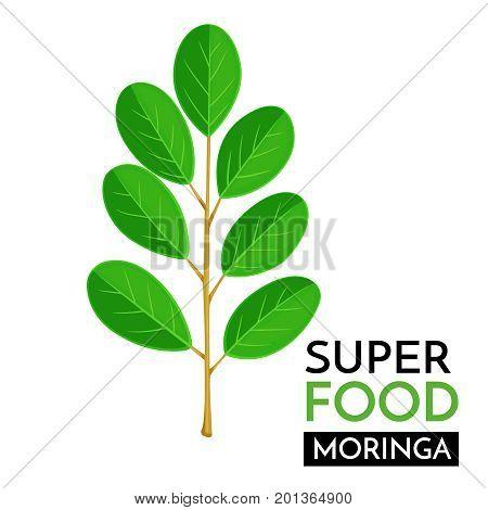 Moringa vector icon. Healthy detox natural product superfood illustration for design market menu superfood .