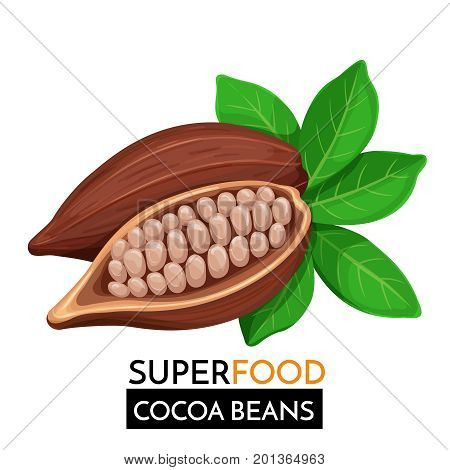 Cocoa beans vector icon. Healthy detox natural product superfood illustration for design market menu superfood .