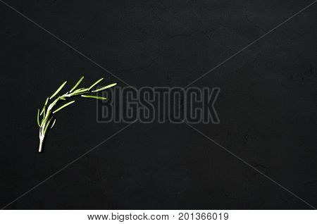 Fresh rosemary herbs isolated on black background. Culinary healthy aromatic herbs. Culinary arts.